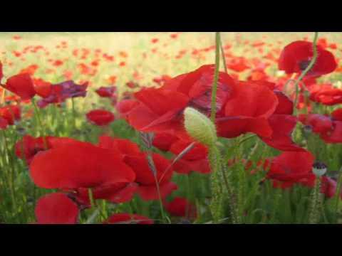 Love Story - Richard Clayderman