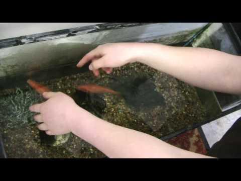Manhandling Fish- Fishhandling?