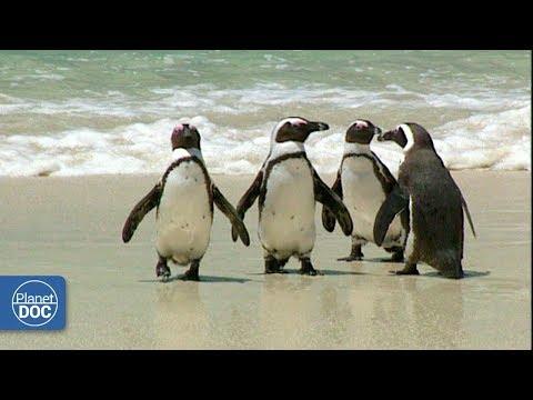 Cape of Good Hope Natural Reserve. Part 2