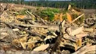 BORNEO ORANG UTAN FOREST PART I.flv