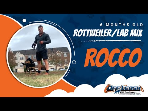 Rocco | 6 Month Old Rottweiler And Lab Mix | Off Leash K9 | Basic Obedience | Dog Training | NOVA