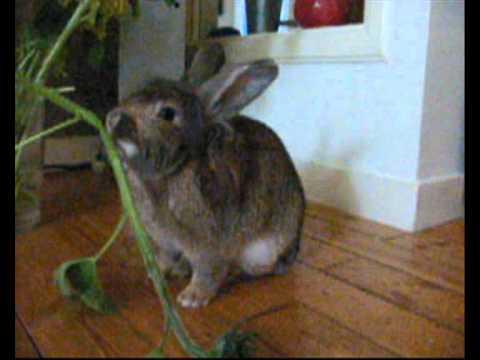 Film elvis het konijn
