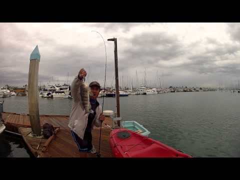 Crankbait fishing at the point loma sportfishing boat for Point loma sportfishing fish count