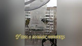 Синички в гостях. Природа. Funny Family Minsk. Весёлая семья Минск