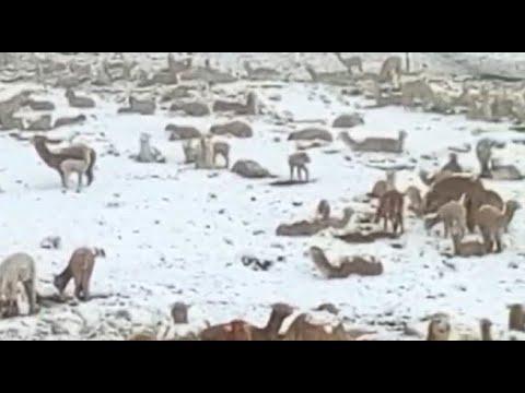 Arequipa: temperaturas llegan a menos 15 grados