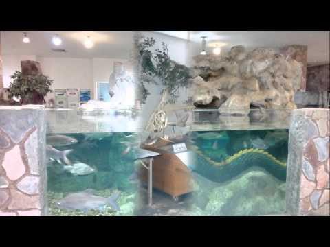 พิพิธภัณฑ์สัตว์น้ำจังหวัดหนองคาย (Nongkhai Aquarium - พิพิธภัณฑ์สัตว์น้ำสิรินธร)