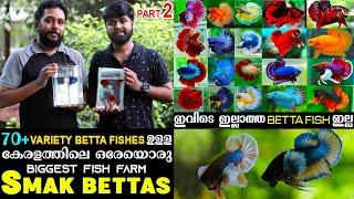 നിങ്ങളിൽ 90% Betta Fish Loversഉം കാണാത്ത  വെറൈറ്റി Betta Fishes കളക്ഷനുമായി Razeen|Smak Bettas??