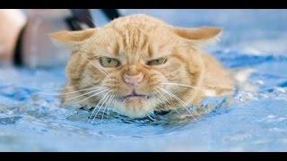 Смешные коты в воде! Подборка 2014!