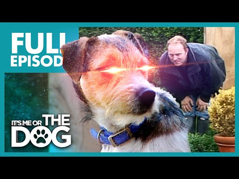 The Man Hating Terrier: Toby | Full Episode | It's Me or the Dog