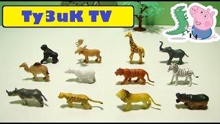 Дикие животные!  Wild animals. Развивающий мультик про животных! animales salvajes wilde Tiere