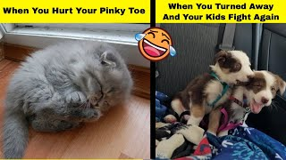 Hilarious Animals Proving Animals Are Furry Human Copies