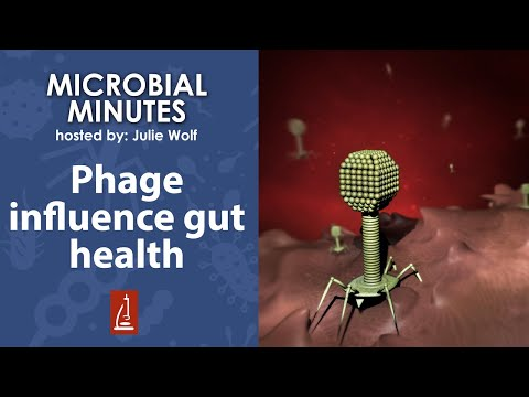 Phage Are Important Layer To Gut Microbiome Ecosystem, Human Gut Health