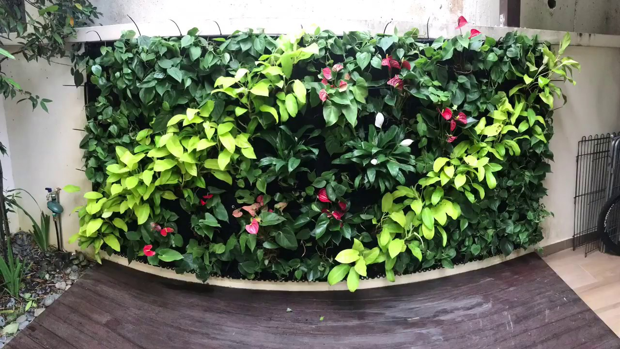 Diy Vertical Garden Green Wall With Automatic Irrigation