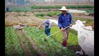 Harnessing Vietnam's Agricultural Potential