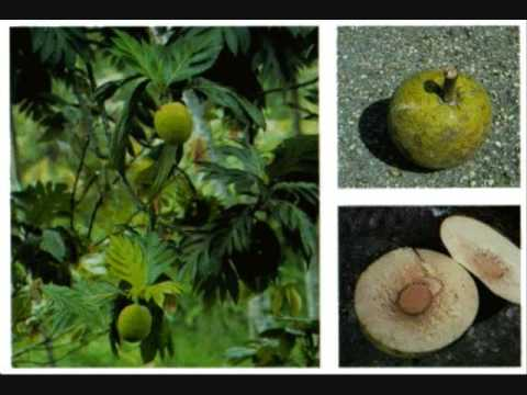 how to cook breadfruit curry