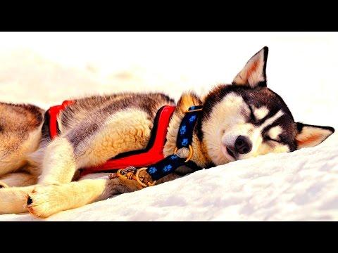 СОННИК - Собака во сне