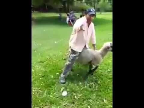 videos xxx sexo con ovejas cabras y perras hembras,
