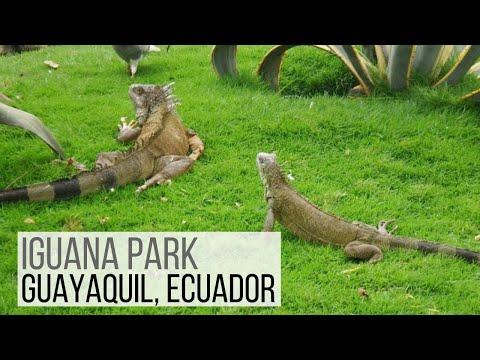 Iguana Park in Guayaquil, Ecuador