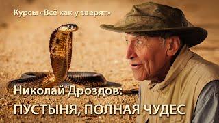 """Николай Дроздов: в мире животных пустыни \ лекция для """"Всё как у зверят"""""""