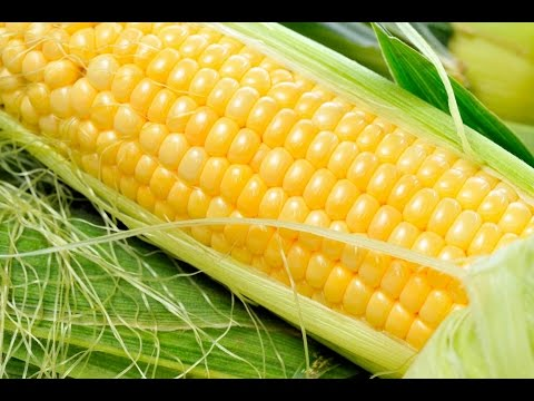 ¿Qué significa soñar con mazorcas de maiz? - Sueño Significado