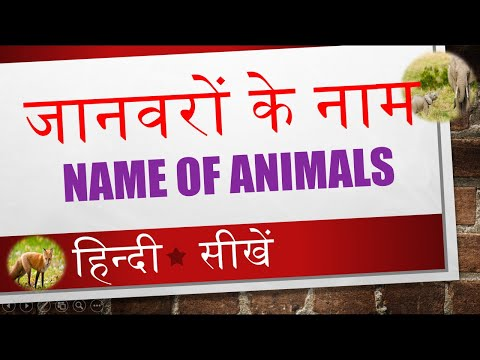 Learn Name Of Animals In Hindi Video 04 Of 14 Youtube