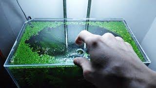 19th Month – (It's a BOY!) NO filter, NO CO2, NO Ferts 5 Gallon Nano Tank