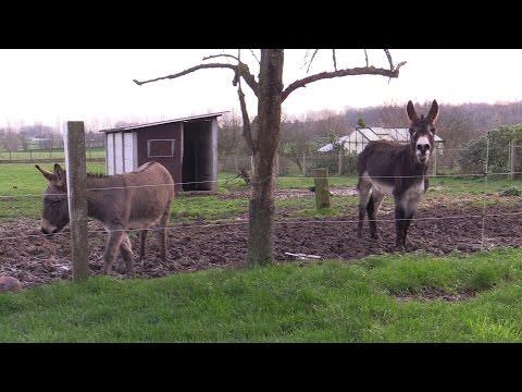 Download Youtube: âne qui brait Bonne année 2016
