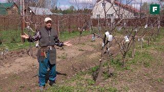 Весенние садовые работы с плодово-ягодными деревьями // FORUMHOUSE