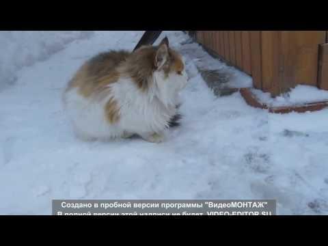 Объявления Северодонецка и региона / Животные и растения