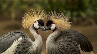 необычные, причудливые птицы (фото)