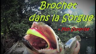Brochet de la Sorgue et Poisson Surprise au Easy shiner 5'' ! HD