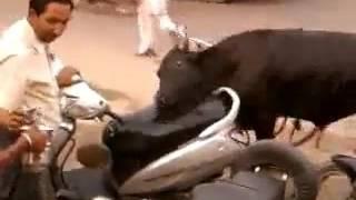 naughty dog fucking bike hahahahah