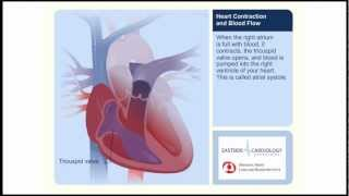 Heart Contraction and Blood Flow