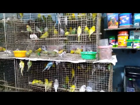 Pets Market Delhi | Exploring Fishes, Birds, Rabbits, Cats, Parrots. All Breeds.