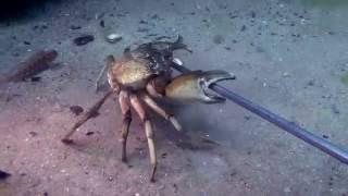 ... Чёрное море моё... дайвинг(г. Ильичёвск, в этом видео: камбала,кефаль,крабы,медузы, затонувшее судно..., 2016-10-09T19:11:30.000Z)