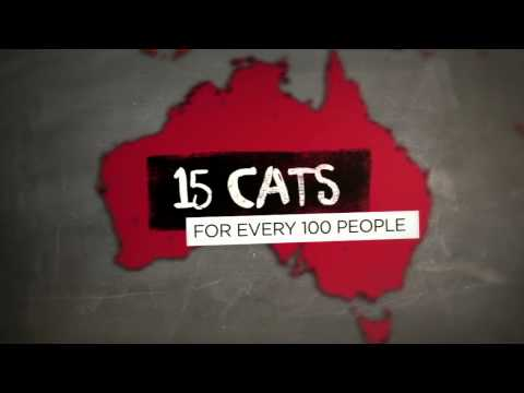 What Impact Do Cats Have In Australia?