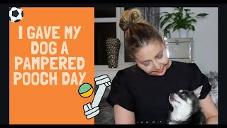 I GAVE MY DOG A PAMPERED POOCH DAY - Tanya Louise