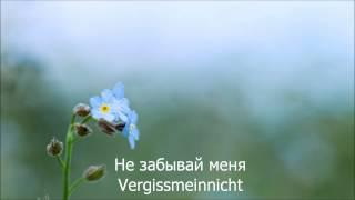 Eisbrecher Vergissmeinnicht HD Lyrics Текст песни и перевод