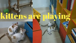 Cat's are playing||cat's are fighting||Little kittens are playing with pen||cute kitten||mixed twins