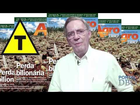 Agro DBO registra  desperdício milionário na safra de soja