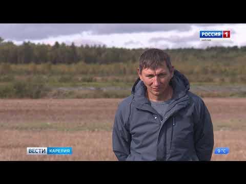 Фермер Сосункевич экспериментирует с новым  сортом картофеля