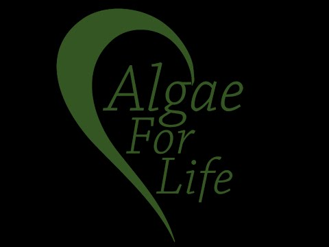 The Magic is Bio Algae Contentrates