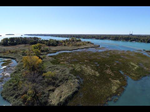 Restoring Fish And Wildlife Habitat On The Detroit River