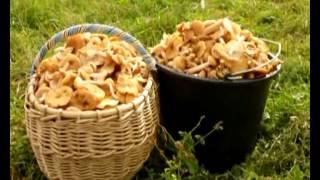 Фрагмент из клипа  По грибы