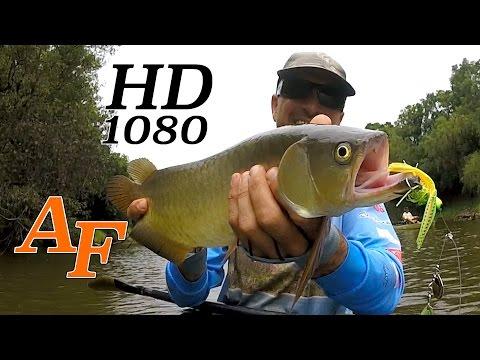 Kayak Fishing the Mary River Saratoga Bass Catfish James Holt Andysfishing Fishing Video EP.198