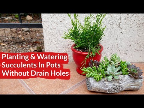Planting & Watering Succulents In Pots with No Drain Holes / Joy Us Garden