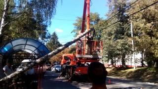 В Новозыбкове на провода упало дерево. 07.09.2016 г.(, 2016-09-08T09:15:09.000Z)