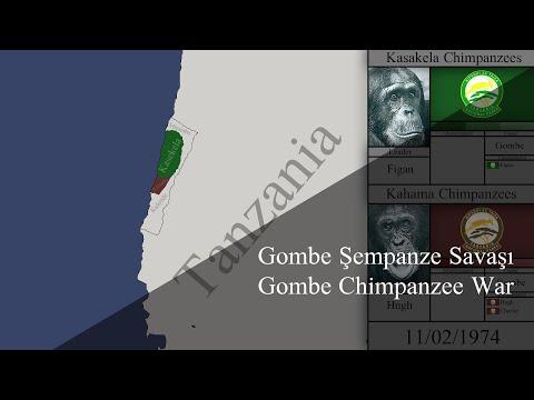 Gombe Chimpanzee War | Gombe Şempanze Savaşı
