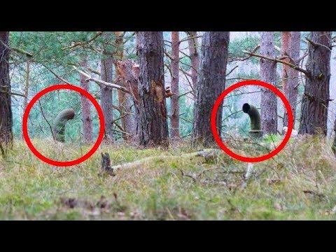 Два парня гуляли по лесу и увидели эти трубы.  То, что находилось под ними, повергло их в ужас!