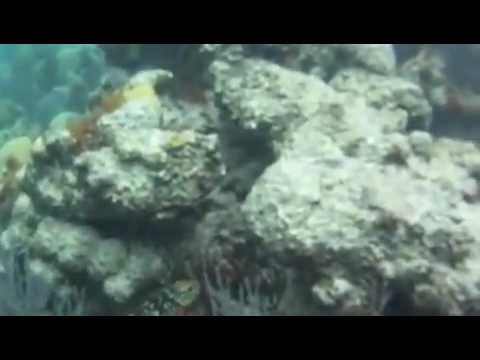 Bermudas Coral Reefs and Shipwrecks [GoPro]